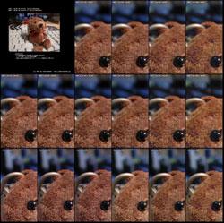 GRD1_vs_GRD2s.jpg.jpg